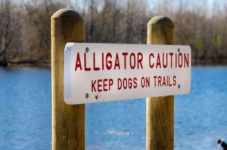 Alligator Caution